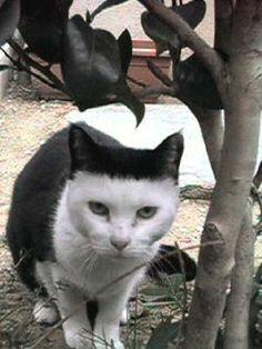 見事な前髪ぱっつん : 猫の模様が可愛すぎる ぱっつん、ザビエル、刺青もん - NAVER まとめ