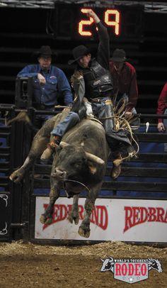 Bull Rider at World's Toughest Rodeo in St. Paul, Minnesota