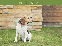Messi (A459225)