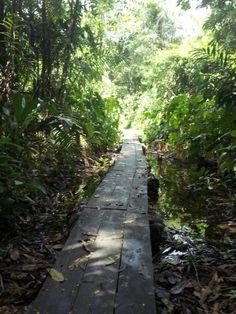 El sendero ecológico.
