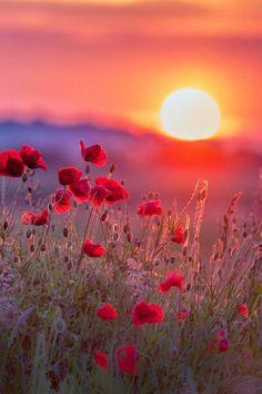 telecharger un un fond d'écran gratuit hd de la coucher de soleil
