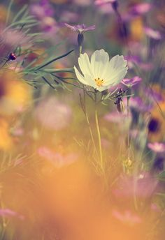 500 days of summer by Jessica Tekert on 500px