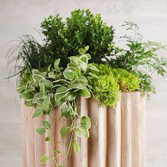 Easy DIY Container Gardens | Boxwood Container | SouthernLiving.com easi diy, box idea, plants, front doors, boxwood, gardens, creeper, design garden, design idea