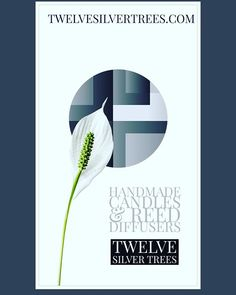 Our luxury handmade candles & Diffusers are now available. Each item is individually made by myself using the finest fragrance oils & the best Eco friendly ingredients. . . . . https://Twelvesilvertrees.com https://www.etsy.com/uk/shop/TwelveSilverTrees . #Twelvesilvertrees #style #jewellery #silverjewellery #ethical #ethicalfashion #photooftheday #accessories #onlineshopping #onlinestore #boutique #ontrend #etsy #etsyseller #etsyuk #homefragrance #luxury #smallbiz #reeddiffusers #candles…
