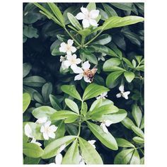Welcome Spring! #bee #nature #lovenature #naturelovers #blossom #spring #garden #plants #flowers #naturaleza #abeja #primavera