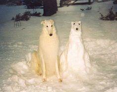 Pooch and Snooch