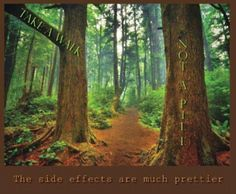 Take a walk, not a pill. #trees #nature #medicine #health #wisdom #tradition #mothernature