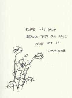 Plants are smug (yet amazing)