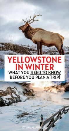 Visiting Yellowstone National Park in winter? Here's all you need to know to plan your winter Yellowstone trip! Yellowstone National Park winter snow | Yellowstone National park in the winter | Yellowstone in winter travel | Yellowstone winter vacation | Yellowstone winter travel tips | Yellowstone winter trip | Visit Yellowstone in winter | Yellowstone winter photography | Yellowstone snow | Yellowstone in December | Yellowstone in January | Yellowstone in February | Wyoming winter travel Yellowstone Winter, Visit Yellowstone, Yellowstone Vacation, Yellowstone National Park, Travel Usa, Travel Tips, Places To Travel, Travel Destinations, Winter Travel