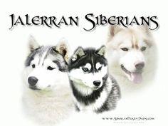 Jalerran Siberian Husky Website