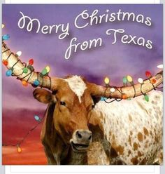 A Merry Texas Christmas to You.not from Texas but love this! Western Christmas, Christmas Art, Christmas Ideas, Christmas Lights, Holiday Ideas, Christmas Paintings, Christmas Animals, Holiday Time, Christmas Inspiration
