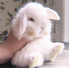 Ideas For Pet Rabbit Breeds Overlays Baby Animals, Funny Animals, Cute Animals, Aesthetic Themes, Red Aesthetic, Cute Baby Bunnies, Cute Babies, Rabbit Breeds, Pet Fish