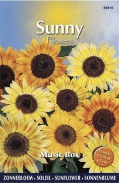 Musicbox is een mooie zonnebloemen mix. Geel, rood en oranje zijn de hoofdtinten van deze soort. Bestel uw tuinzaden gemakkelijk en snel bij huisentuinkado.nl