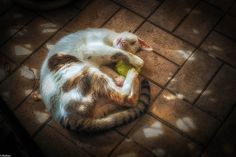 Monty | Flickr - Fotosharing!