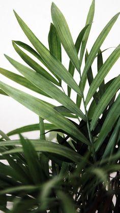 optie- howea palmen die de bloemen meer een extra accent geven. in de vorm van planten, maar ook verwerkt in de boeketten