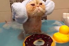 Meet your new lifestyle guru, THIS CAT.   Let This Cat Taking A Bath Show You How To Live Your Best Life