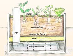 Make your own wicking beds from recycled material. Learn how to be water-wise using a water reservoir with your wicking garden bed. Wicking Garden Bed, Wicking Beds, Garden Watering System, Self Watering Plants, Home Hydroponics, Aquaponics, Sand And Water, Water Wise, Compost Soil
