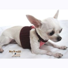 1000 images about dog fashion on pinterest chihuahua - Dog clothes for chihuahuas ...