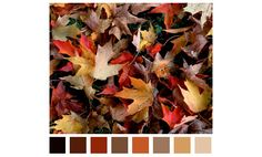 #Fall- it is the perfect time to pull out those oranges, golds, rusts, blacks and tans for a great display!