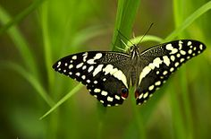 Heaven Moth, Insects, Heaven, Animals, Animales, Animaux, Animais, Sky, Paradise