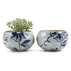 T4U 425 Inch Ceramic Japanese Style Clay Serial Daisy succulent Plant Pot Cactus Plant Pot Flower Pot Container Planter Package 1 Pack of 2 -- You can find more details by visiting the image link.Note:It is affiliate link to Amazon.