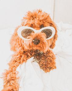 Super Cute Puppies, Cute Little Puppies, Super Cute Animals, Cute Dogs And Puppies, Cute Little Animals, Baby Dogs, Cute Funny Animals, Cute Babies, Doggies