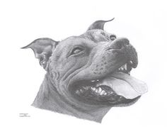 Staffordshire Bull Terrier STAFFIE 4 dog by ArcadiaPortraits