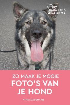 Wildlife Fotografie, Photo Maker, Change Is Good, Dog Photography, Husky, Dog Cat, Photoshop, Dogs, Animals