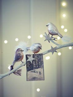 Nine Glass Bird Clips  |  Cox & Cox