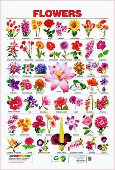 Pin By Malinda Swarts On Mam Pretty Flower Names Flower Images With Name Flower Names