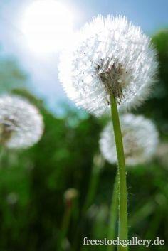 Die 69 Besten Bilder Von Natur In 2017 Blumenwiese Himmel Und