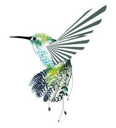 Kingdom Animalia, Hummingbird (by Olechka)
