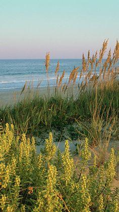 beach grass k ultra hd wallpaper ololoshenka Pinterest
