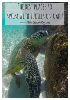 A guide to the best places to swim with Sea Turtles on Oahu, Hawaii. A guide to the best places to swim with Sea Turtles on Oahu, Hawaii. Hawaii 2017, Aloha Hawaii, Hawaii Travel, Travel Usa, Honolulu Hawaii, Italy Travel, Pearl Harbor, Kauai, Oahu Vacation