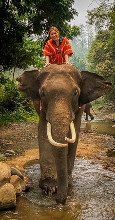 Being Elephant Owners for a Day & Bathe with Elephants ✓