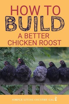 One of the tricks to a healthy and happy chicken flock is a good solid chicken roost. This DIY chicken roost system works great especially if you have a small coop and a lot of hens. DIY chicken roost. How to build a chicken roost. The best roost for your chickens. Why do chickens need a roost? Chicken coop diy roost #chickenroost #backyardchickens #chickencoop Chicken Roost, Chicken Feed, Diy Chicken Coop, Baby Chickens, Raising Chickens, Chickens Backyard, Building A Chicken Run, Chickens In The Winter, Chicken Tractors
