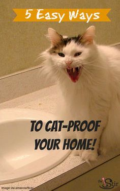 How to cat proof your house.    #petproofhome #care #pets #cats #kittens #dogs #puppies #safety #home