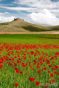 Castle over the poppies sea - Almonacid de Toledo, Spain