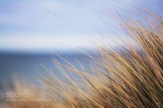 Marram Grass by JoernBrede