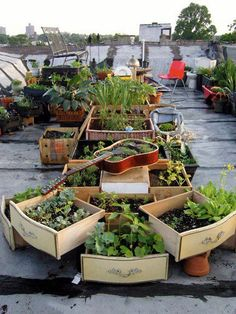 Rooftop Container Gardening    Look at all of the items being reused as planters on this rooftop container garden - wine boxes, infant carriers, picnic baskets, guitars and more. What things do you have waiting to be re-purposed around your home
