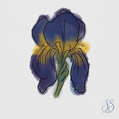 """Iris Stam on Instagram: """"Last prompt we had for the week was drawing our favorite flower.  The Iris is not my favorite flower, but I like it very much and well...…"""" Prompts, Like Me, Iris, Watercolor Paintings, My Favorite Things, Natural, Drawings, Flowers, Instagram"""