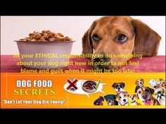 Dog Food Secrets 4th Edition Review-Dog Food Secrets Pdf Does It Really ...