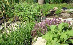 El autocultivo de plantas medicinales, es una buena forma de asegurarse el obtener todas las propiedades intactas.