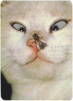 Kočičky - Marťánka a Jerrynky stránka.... - Fotoalbum - Obrázečky se zvířátky - Legrační obrázky ..... - sranda 4.jpg