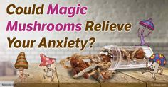Recent studies suggest that psychedelic drug psilocybin, also known as magic mushrooms, may have profound benefits for cancer patients struggling with anxiety.