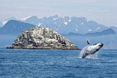 Los satélites detectan ballenas desde el espacio - http://staff5.com/los-satelites-detectan-ballenas-desde-espacio/