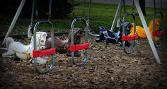 Flying Pony Swings ...