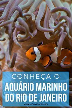 Conheça o AquaRio - o Aquário Marinho do Rio de Janeiro. Uma atração imperdível para turistas e cariocas! Venha ver de perto tubarões, arraias e, claro, o peixe-palhaço!