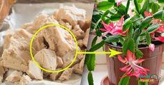 hnojivopro Hoya Plants, Diy And Crafts, Flora, Vegetables, Pergola, Ethnic Recipes, Gardening, Rarity, Tips