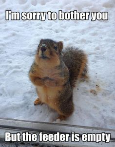 I'm sorry to bother you, but the feeder is empty!